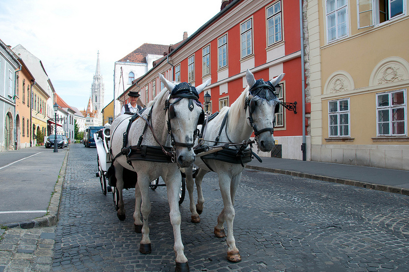 Horse & Carriage Buda Castle One Day
